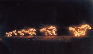Black wild horses (5)